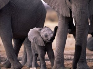 Mike Hirst needs your help to save orphaned baby elephants